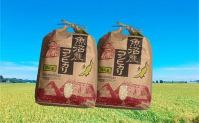【F2901】魚沼産コシヒカリ 6kg