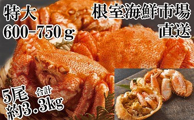 CC-14012 根室海鮮市場<直送>北海道産毛がに5尾(計約3.3kg)[419800]