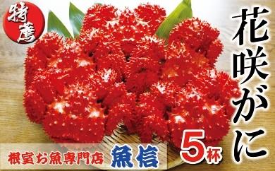 CC-04005 花咲がに900g~1kg前後×5尾[419864]