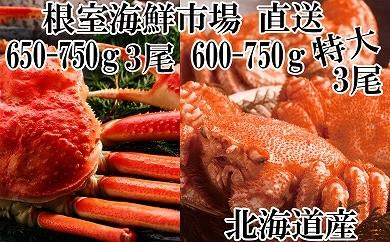 CC-14011 根室海鮮市場<直送>北海道産毛がに3尾、ずわいがに姿3尾[419799]