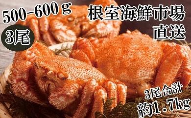 CB-14021 根室海鮮市場<直送>北海道産浜茹で毛ガニ3尾(約1.7kg)[419786]