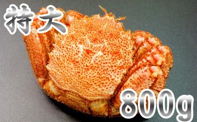 15-8 【数量限定】オホーツク産特大毛ガニ800g(1尾)