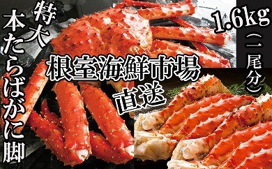 CB-14032 根室海鮮市場 本たらばがに脚1.6kg(800g×2肩)[419797]