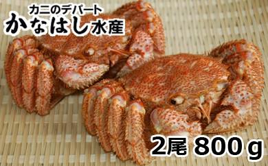 [Ka303-C057]【極上】毛ガニ2尾800g(ボイル)