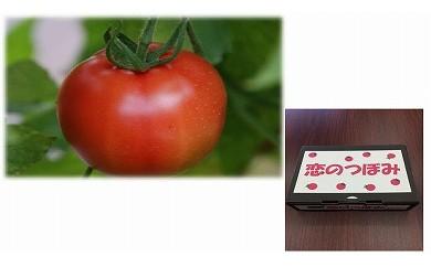 JAなめがた フルーツトマト恋のつぼみプレミアム1㎏(化粧箱)