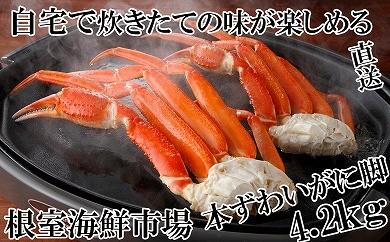 CC-14019 根室海鮮市場 本ずわいがに脚4.2kg[419807]