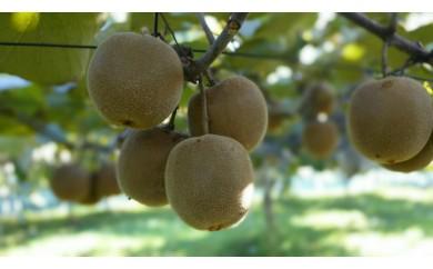 飯能の土と水と太陽だけで育てたキウイフルーツ 3.5㎏(Orchard Yamashita)