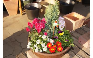 D-004 季節の花の寄せ植え 25㎝鉢