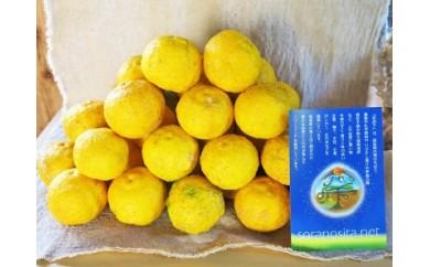 自然農法 黄柚子40個
