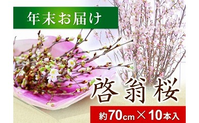 AT01 春を先取り!冬に咲く桜『啓翁桜』(年末お届けSサイズ)