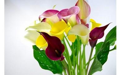 AT05 センスが光る切花『カラー』3色15本セット