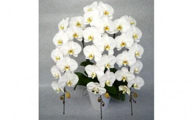 [№5535-0010]ホワイトロッキー3本立て 白