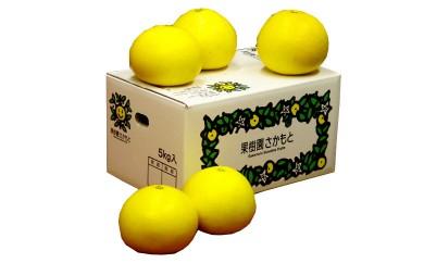 柑橘の里 高知県 立目産 土佐文旦 贈家庭用混合品10kg