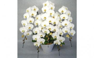 [№5535-0011]ホワイトロッキー5本立て 白