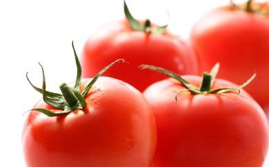 [№5722-0060]ミネラルトマト