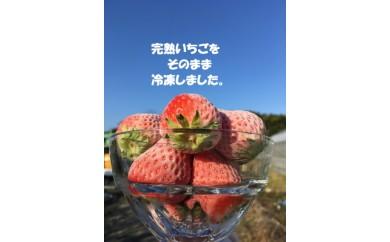 103-247 冷凍いちご(紅ほっぺ) 約1.7㎏