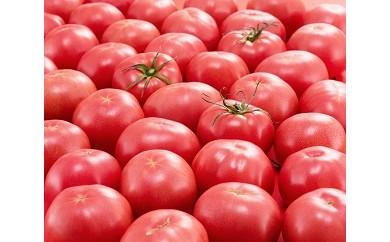 Fd-04 四万十とまとの採れたてトマト 2.0kg × 四万十とまとカレー(キーマ・バターチキン)6Pセット