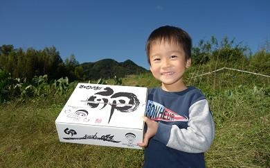 [№5862-0023]日本遺産大山の麓で育った「さかもとのたまご」2L20個×4