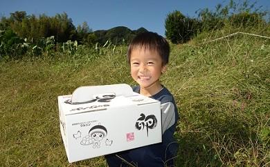 [№5862-0024]日本遺産大山の麓で育った「さかもとのたまご」2L50個×2