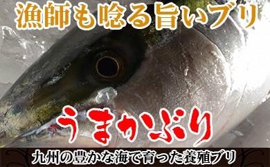 A248.【約1.2kg】漁師も唸るうまかブリ(真空パック入り)半身1枚