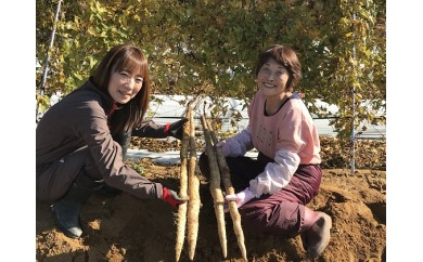 [№5884-0105]自然薯 荒島 1kg