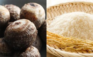[№5884-0127]麦田さんの農産物 コシヒカリ玄米30kgと上庄里芋10kgセット