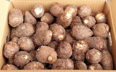 [№5884-0106]大野の里芋 3kg