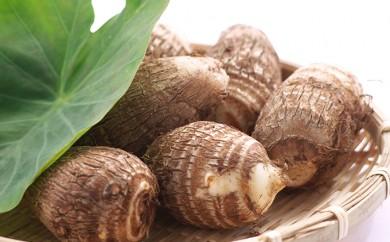 [№5884-0107]上庄の里芋5kg 日本一の味をめざす特別栽培里芋