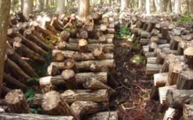[№5884-0099]昔ながらのこだわりの原木栽培 干ししいたけ