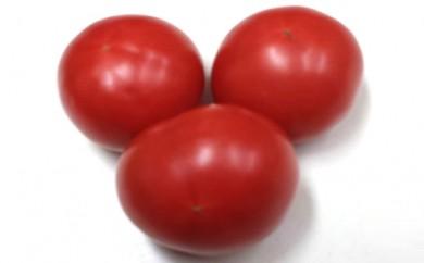 [№4631-1284]温暖な気候で育った 「大玉トマト」 4kg