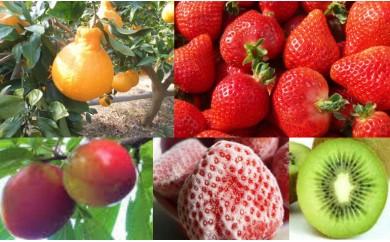 A9903 【定期便(5回発送)】「果物」定期便セット(キウイ・デコポン・あまおう・冷凍あまおう・すもも)