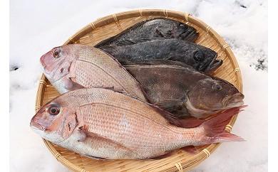 B-6季節の鮮魚セット