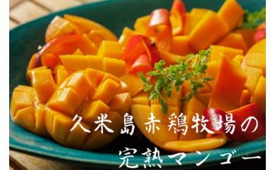 【2019年分】久米島赤鶏牧場の完熟マンゴー1kg(2~3玉)