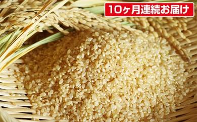 [№5751-0221]【10ヶ月連続お届】矢野川のお米ヒノヒカリ 10kg 玄米 計100kg