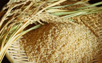 [№5751-0219]【3ヶ月連続お届】矢野川のお米ヒノヒカリ 10kg 玄米 計30kg