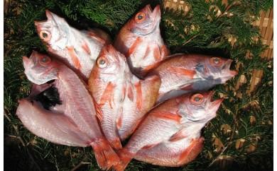 [№5716-0145]~丹後の魚屋お薦め~高級のどぐろの一夜干し