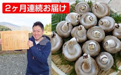 [№5822-0103]【2ヶ月連続】菌床による、生シイタケで「おーい菌床しいたけ」1kg
