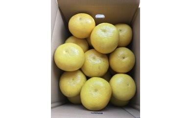 小野果樹園の文旦【家庭用】10kg(2L~4L)