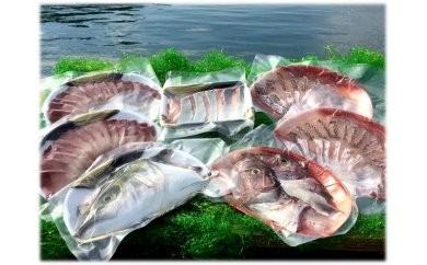 [052003]宿毛の養殖ブリ、直七マダイの豪華しゃぶしゃぶ鍋セット
