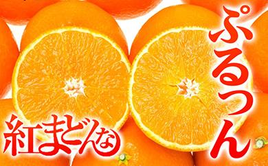 大人気!愛媛限定の高級柑橘「紅まどんな」(最上級品・二段階選別!)