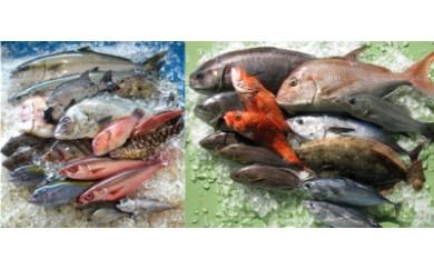 ◆復興企画対象◆新鮮土佐魚の詰合せセットE