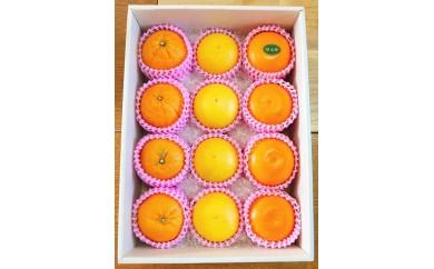 AA5 柑橘フルーツセット(M)