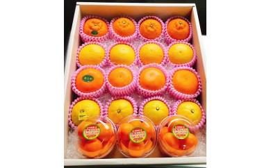 BB4 柑橘フルーツセット(L)
