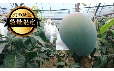 【数量限定2018年発送】幻の緑玉 大宜味村キーツマンゴー