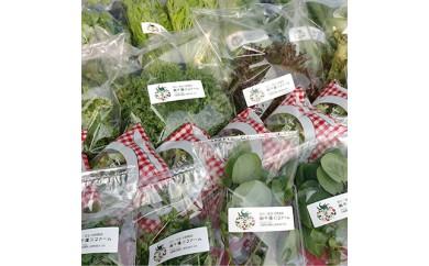 ふるさと新鮮野菜パック(II)【1004086】