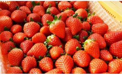 I29010 大分フルーツ紀行〃旬の果物を1年間お届けします!計12回
