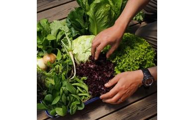 C-1 よしむら農園 オーガニックおまかせ野菜セット①