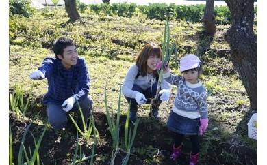 D2 収穫体験チケット(親子ペア)