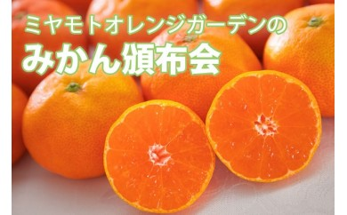 H25-40.ミヤモトオレンジガーデンの「みかん頒布会」