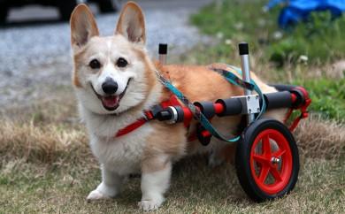 [№5644-0391]中型犬用二輪車椅子(背丈33~65cm 体重22キロ以下)